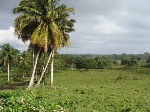 Стройматериалы в доминикане