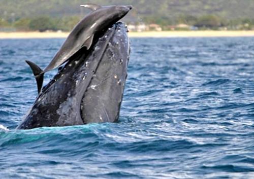 Доминиканская республика отдых киты дельфины групповой секс пенис