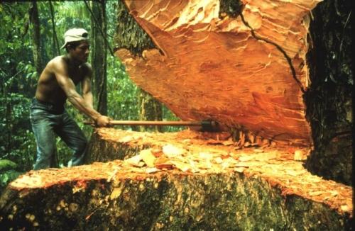 Доминиканская республика красное дерево