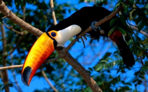Доминиканская Республика отдых природа безопасность