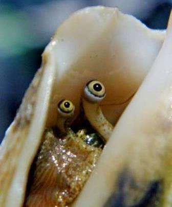 Доминиканская Республика путеводитель земля жемчуг море океан Стромбус
