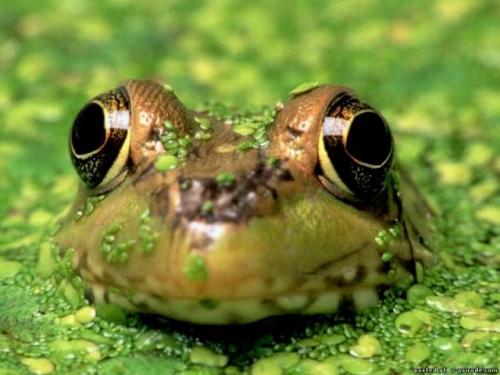 Доминикана факты о лягушках подробный путеводитель