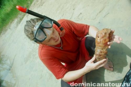 Доминиканская республика дайвинг лангусты подводная охота